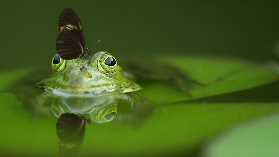 A frog with a butterfly sitting on its head